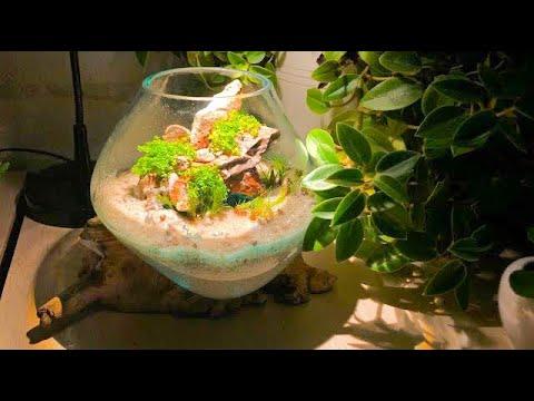 Fish Bowl Aquarium - Fish Bowl Decoration Ideas