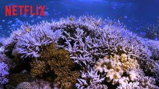 En busca del coral | Tráiler oficial | Netflix
