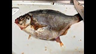 Hai mẹ con đi chợ mua cá, về nhà lấy tay ấn nhẹ vào bụng nó cô không thể tin nổi