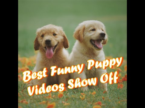 Cute And Funny Dogs Video Compilation || Baby dogs || Cute Dogs || Compilated Dog Videos || Video 1