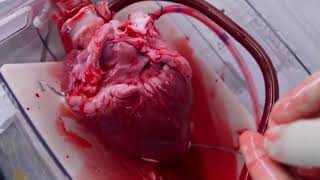 Heart beating outside human body