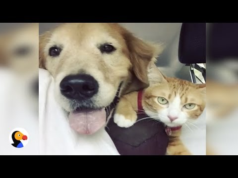 Dog Adopts Feral Kitten and Become BEST Friends | The Dodo