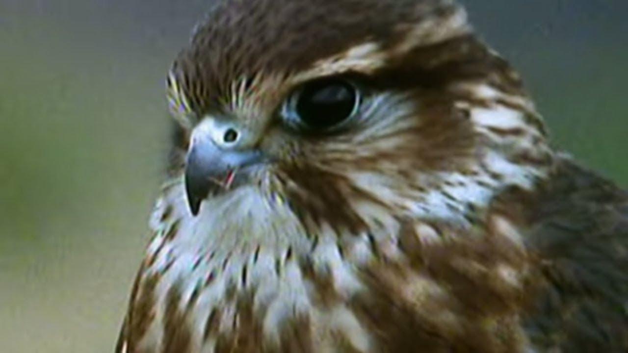 Secret Nature - Facts About Birds of Prey