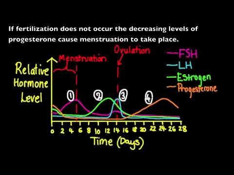 menstrual cycle diagram with ovulation lewis dot for oh 6.6.3 annotate a graph showing hormone levels in the - youtube