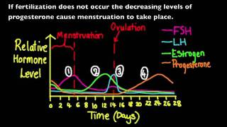 6.6.3 Annotate a graph showing hormone levels in the menstrual cycle