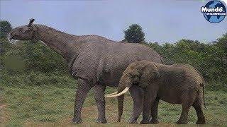 Animais que você vai agradecer por estarem extintos!