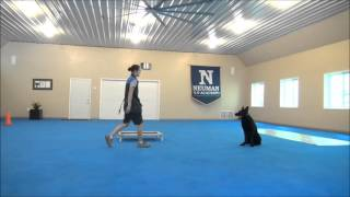Gonzo (german Shepherd Dog) Boot Camp Dog Training