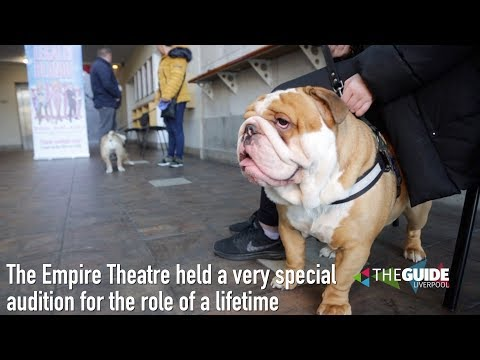 Legally Blonde Dog Auditions, Liverpool Empire | The Guide Liverpool