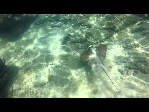 Snorkelling Great Keppel Island, AUSTRALIA - Mars 2015