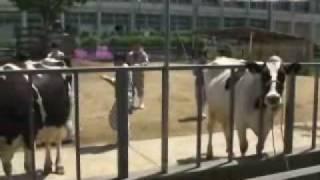 農芸高校 資源動物科 家畜審査競技