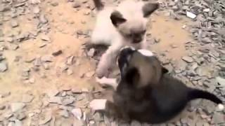 cat attacking kitten