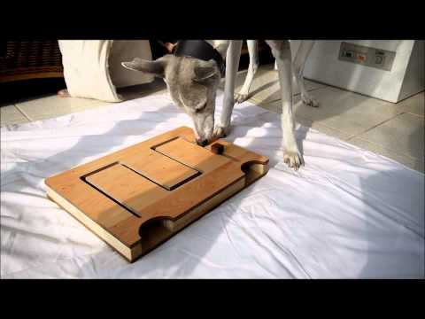 Maze puzzle from Puzzle-It for dogs
