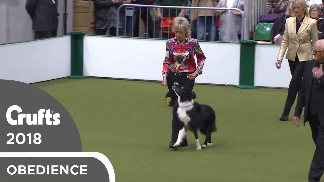 Obedience - Dog Championship - Part 10   Crufts 2018