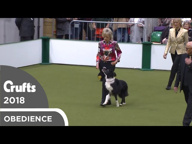Obedience - Dog Championship - Part 10 | Crufts 2018