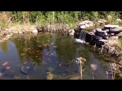 Bassin de Jardin - Aménager un Bassin extérieur avec cascades
