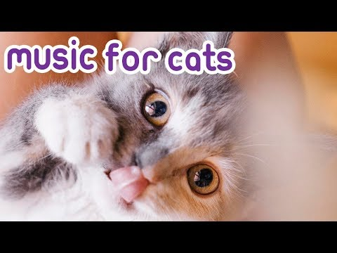 New Music For Cats! 15 hours! 🐱💤