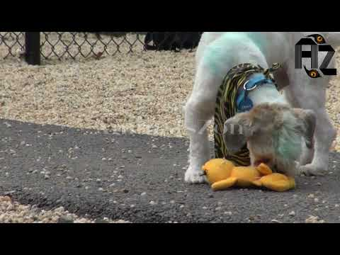 Animals zon Smarty Dogs | Funny Dog Video Compilation | Funny Dogs - A Funny Dog Videos Compilatio