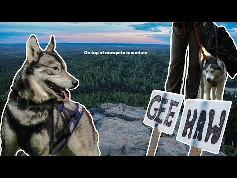 How to train your sled dog - Travel Vlog Canada #9
