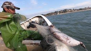 深海大物撞上渔网无法逃脱,阿雄一人抱都抱不动,这趟赚了2000块