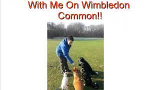 Dog Tired  Wimbledon Dog Walking Services   Dog Walking Services Wimbledon