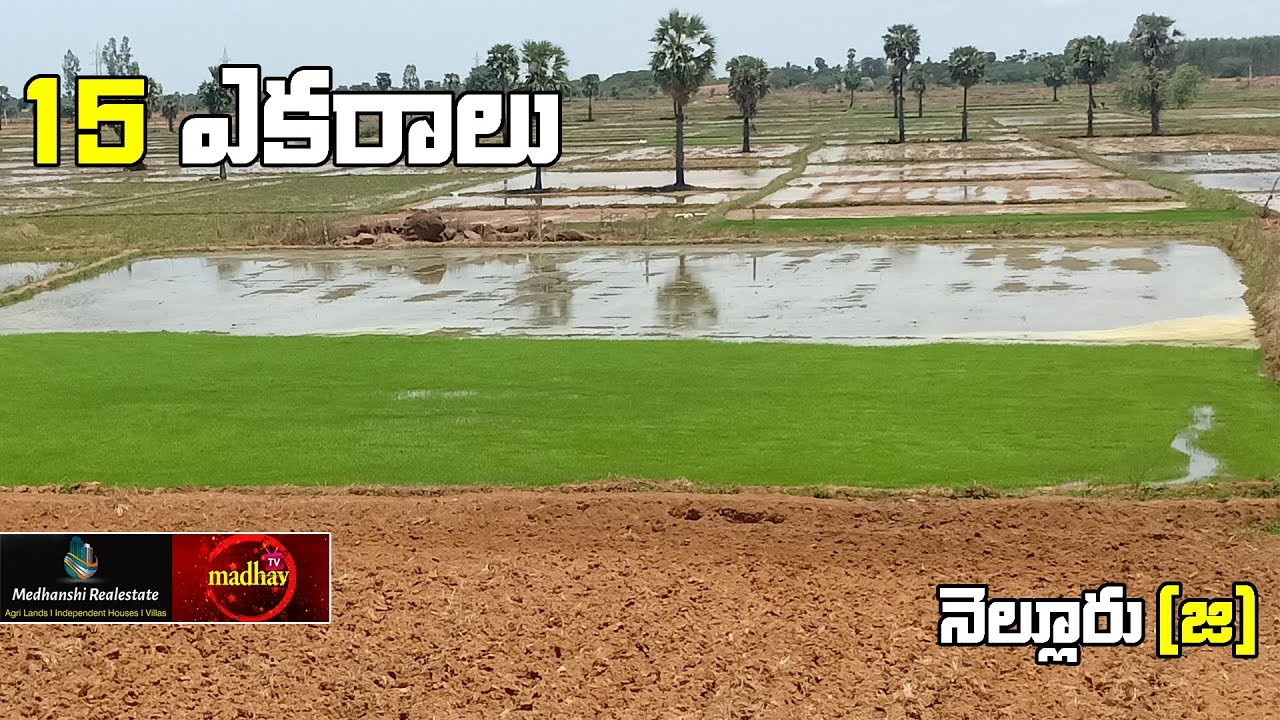 15 Acres || Paddy Land For Sale || 5 Km from NH5  || Nellore District ||  7386888988 || #MadhavTv||