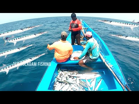 Longline Fishing // Hound Fish , Lesser Queenfish  And Small Gobia Fish