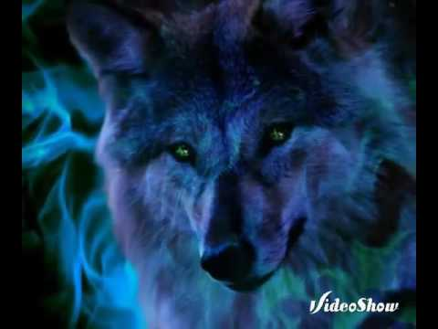 Fotos De Lobos Lindos Youtube