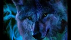 Fotos de lobos lindos