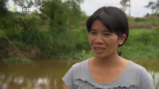 Monster giant crocodile hunt in philippines documentaries Animal planet documentary