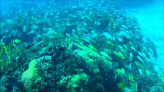 Bimini Dive Trip With Brownie's Marine Group