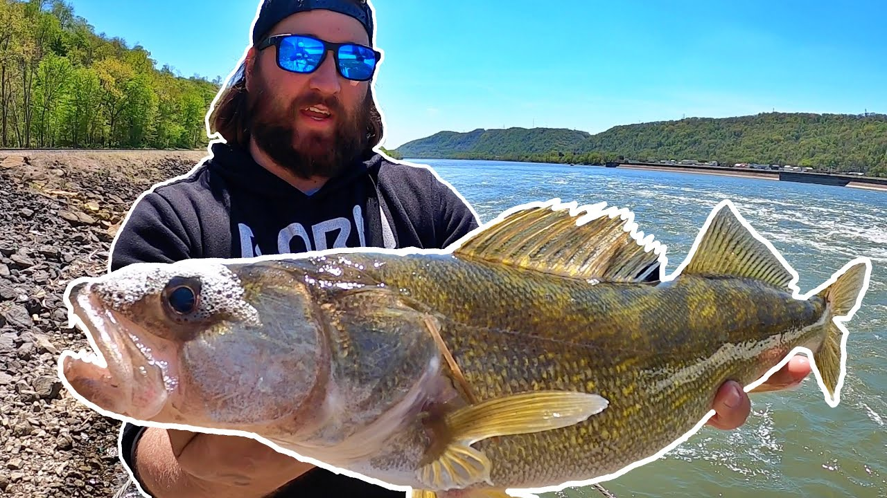 FISHING the OHIO RIVER for WALLEYE and HYBRID STRIPED BASS!
