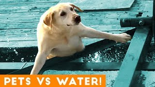 Funniest Pets Playing with Water Compilation of 2018 | Funny Pet Videos