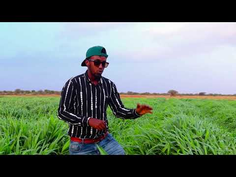 AquaCalaf Farms: Growing the right animal feed for Somali animal herders! Stay tuned for more clips!