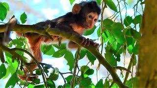 Mom Tara start to train her baby monkey on the Tree, Baby monkey Titan look so scare