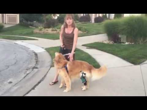 Posh Dog Knee Brace And Koko