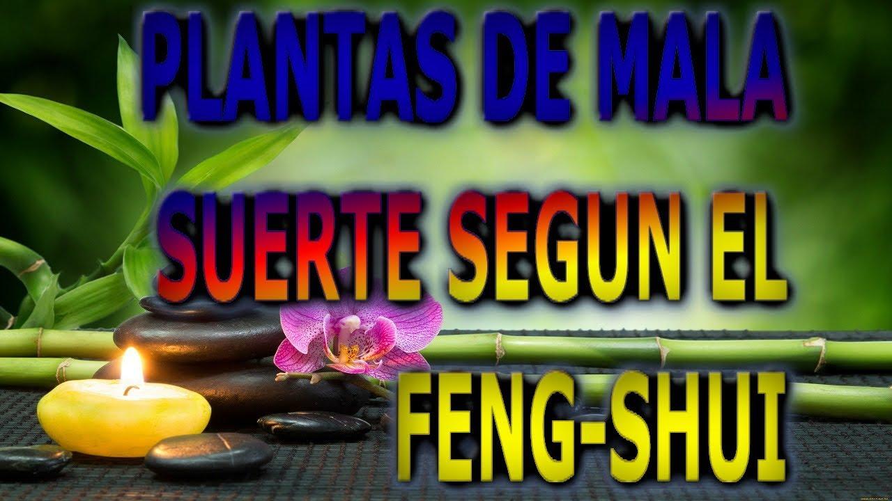 plantas de la mala suerte segun el feng shui info