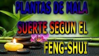 Plantas De La Mala Suerte Segun El Feng Shui Info Garden Youtube