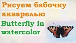 Как нарисовать бабочку акварелью. Видео урок по акварели. Цуканова Виктория