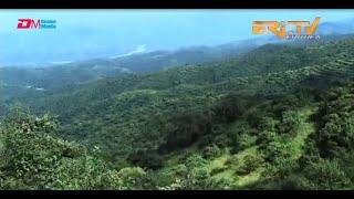 ERi-TV Documentary: ወፍሪ ሓምላይ ኤርትራ ውጸኢት ኣርእዩ - Greening Eritrea Campaign Pays Off
