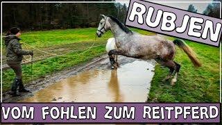 Rubjen - vom Fohlen zum Reitpferd ✮ ist er brav im Gelände?