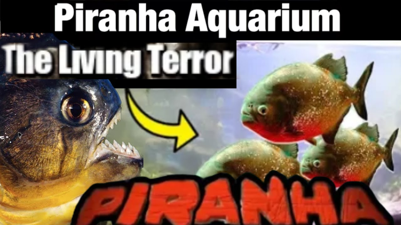 Giant Piranhas Fish Aquascape Aquarium Tank video by ...