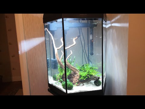 Aquascaping A Planted 80 Litre Hexagonal Tank (Suprise Ending!)