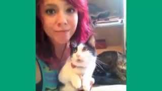 Cele mai tari faze cu pisici 2016 The best funny cats compilation 2016