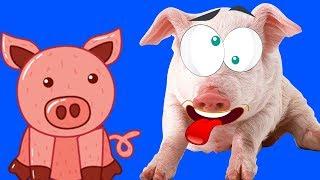 - СИМУЛЯТОР СВИНЬИ сумасшедшая свинка бегает и все ломает  Pig Simulator играет в детский летсплей