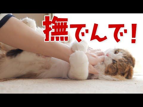 鳴いて甘えるくせにママが癒されたい時は塩対応なツンデレもふ猫