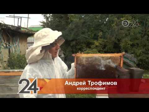 Татарстанские пчеловоды подсчитывают убытки