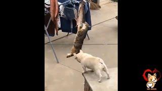 Hài hước động vật - Cười bể bụng trước những khoảnh khắc hài hước của động vật - Try not to laugh 2