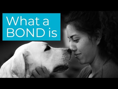 A Bond: The investment kind..