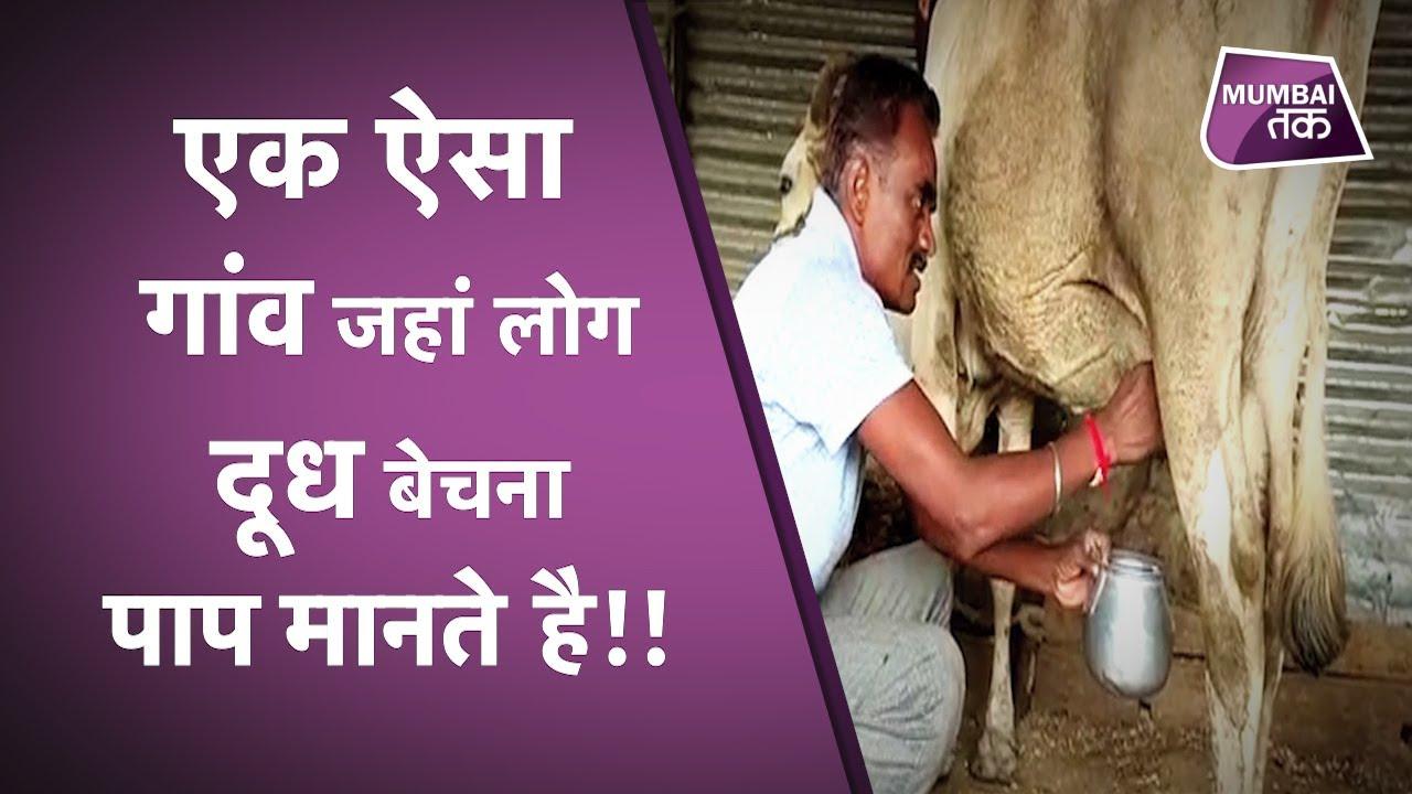 Maharashtra का एक ऐसा Village जहां लोग Milk बेचना पाप मानते है..