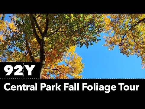 Central Park fall foliage tour (Periscope)
